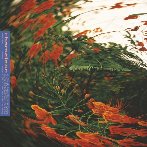 anthony-naples-chameleon-lp-pre-order-ans-cover