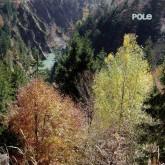 pole-wald-cd-pole-music-cover