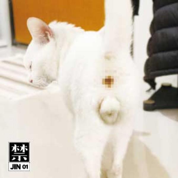 initials-bb-lujiachi-gonno-samo-dj-jin01-jin-cover