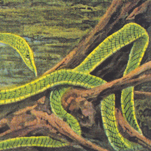 rainforest-spiritual-enslavement-green-graves-lp-hospital-productions-cover